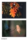 Photo autumn leaves
