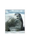 Photo bearded seal