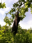 Photo bee swarm