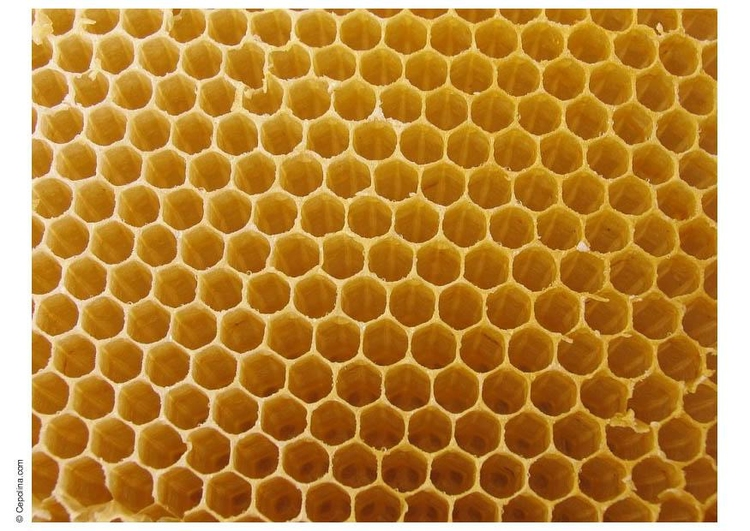 Photo beehive honeycomb