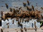 Photo beehive