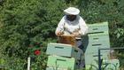 Photo beekeeper