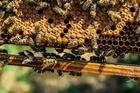 Photo bees