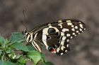 Photo butterfly