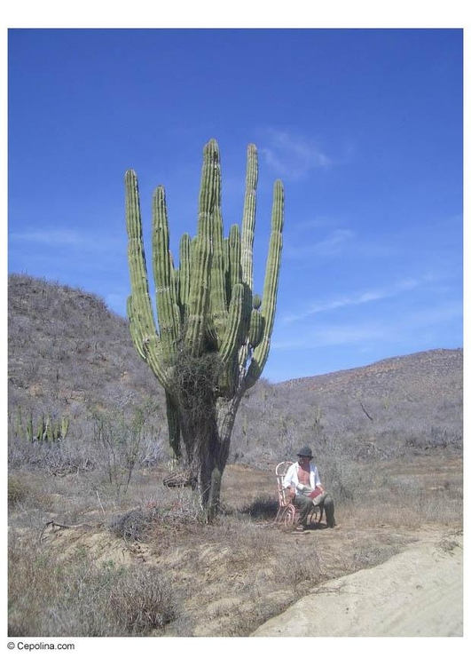 Photo cactus in desert