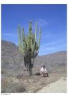 Photo cactus in desert