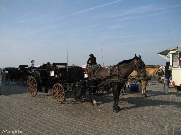 Photo carriage