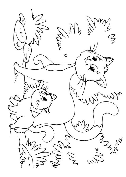 cats and kittens color pages