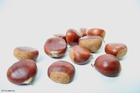 Photo chesnuts