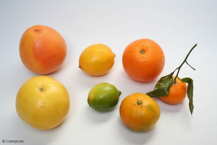 Photo citrus fruits
