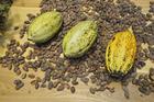 Photo cocoa beans