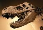 Photo dinosaur skull t-rex
