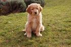 Photo dog - puppy