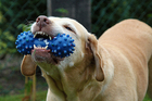 Photo dog with toy