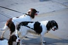 Photo dogs on leads