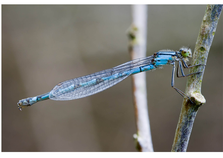 Photo dragonfly