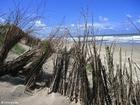 Photo dunes 7