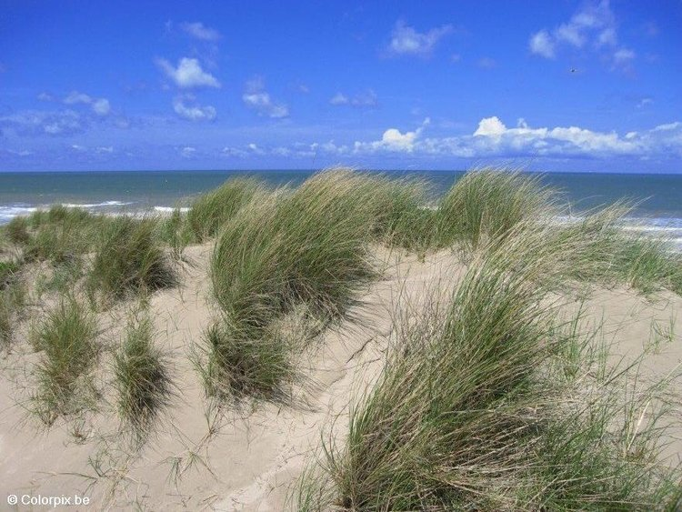 Photo dunes and sea
