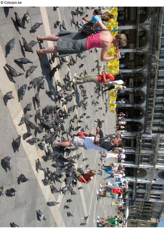 feeding the pigeons at San Marco Square