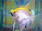 Photo fish 2