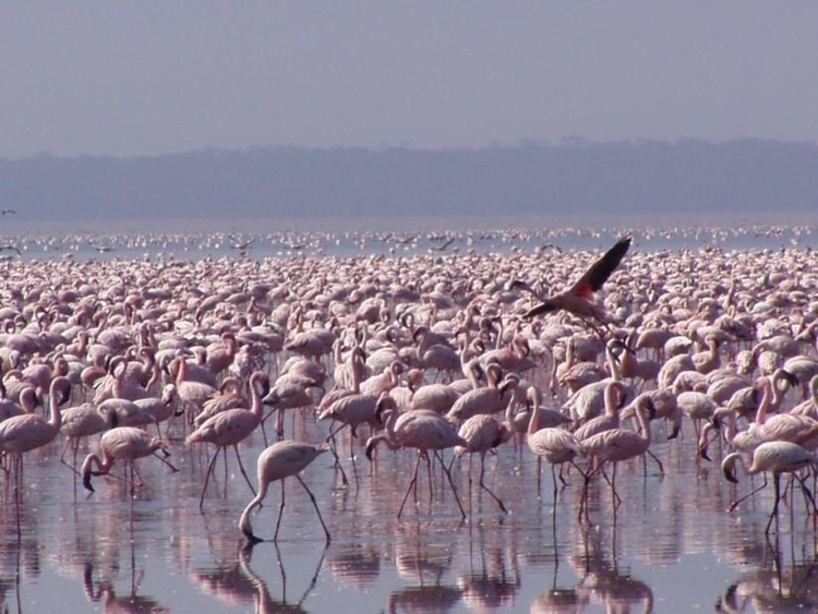 Photo flamingos