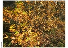 Photo forest - autumn leaves