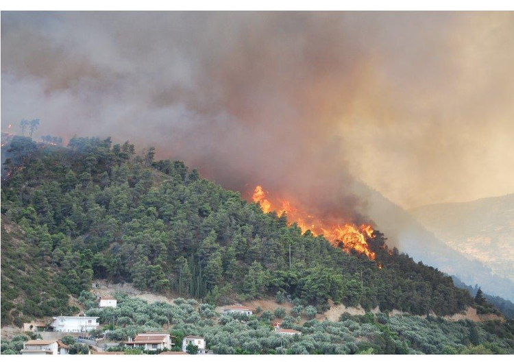 Photo forest fire