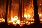 Photos forest fire