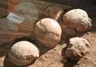Photo fossils dinosaur eggs