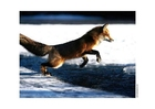 Photos Forest
