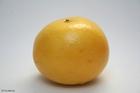 Photo grapefruit