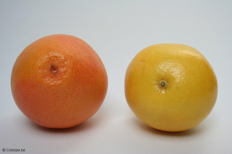 Photo grapefruits