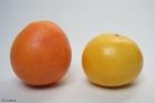 Photo grapefruits