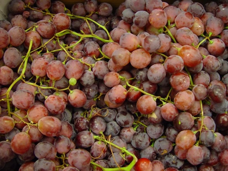 Photo grapes