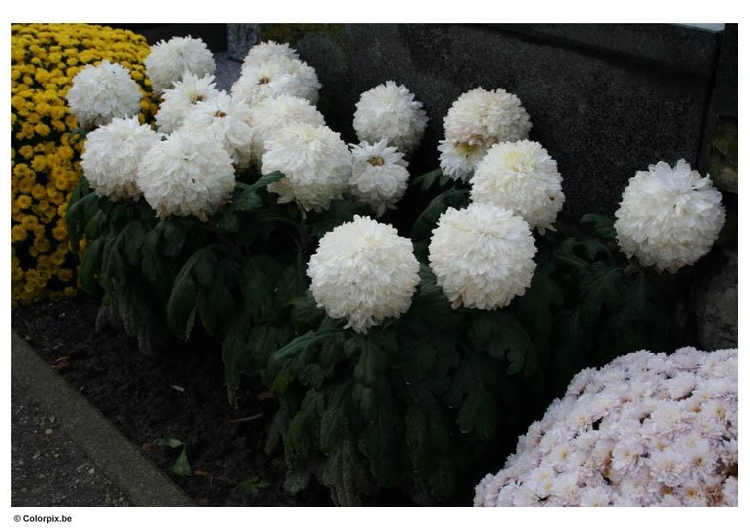 Photo flowers in graveyard