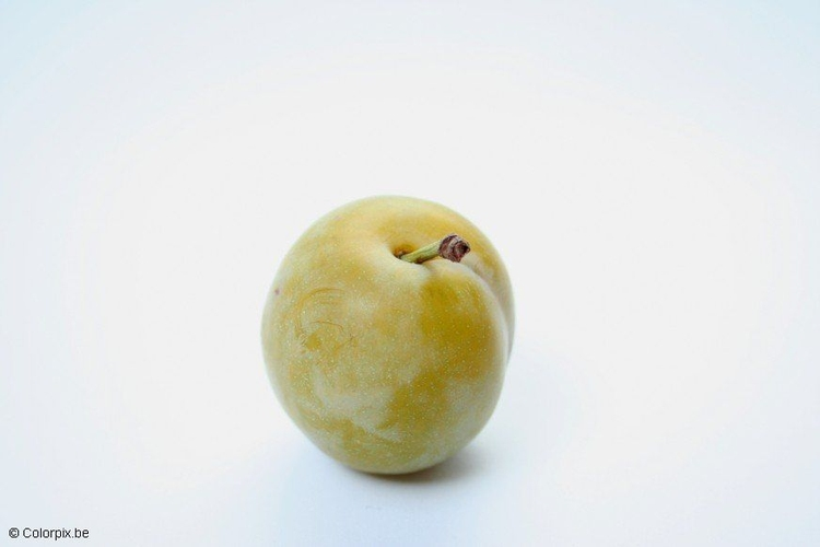 Photo greengage plum