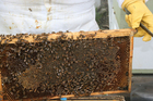 Photo honeycomb