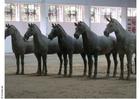 Photo horse statues, Xian