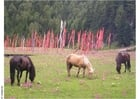 Photo horses and prayer flags