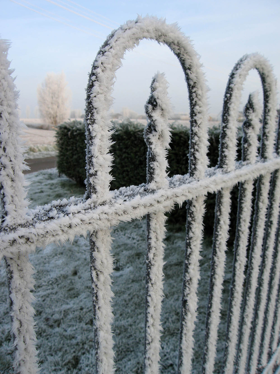 Photo icy fence