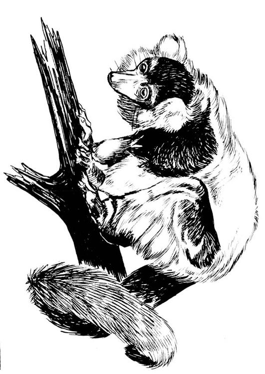 Lemur Coloring Pages : ColoringFinder