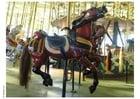 Photo merry-go-round
