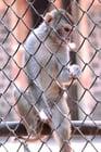 Photo monkey in captivity