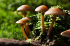 Photo mushrooms