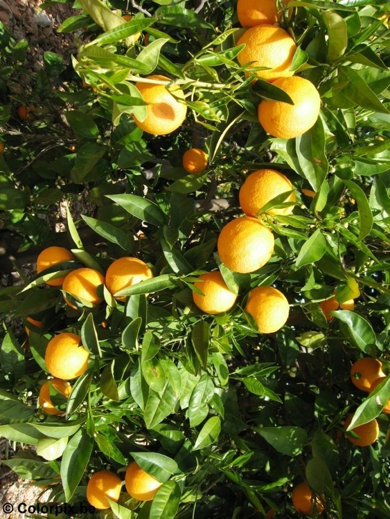 Photo oranges