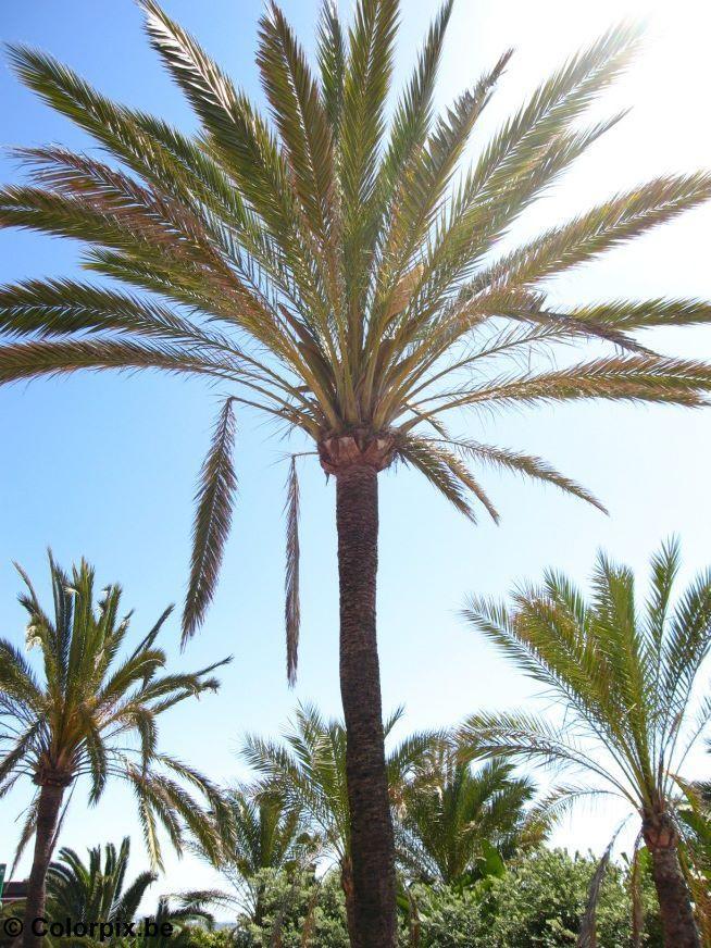 Photo palm trees