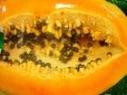 Photo papaya