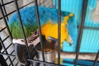 Photo parrot in cage