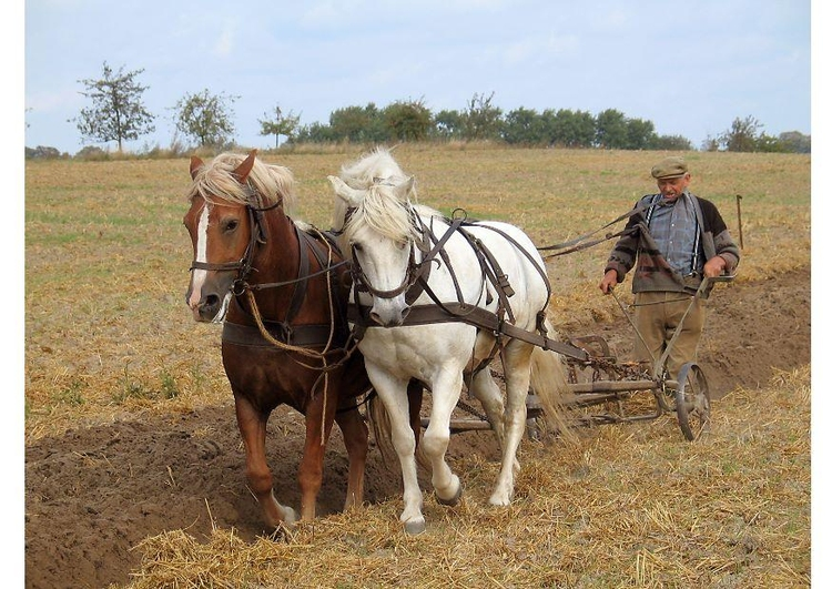 Photo plowing farmer