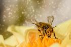 Photo pollen